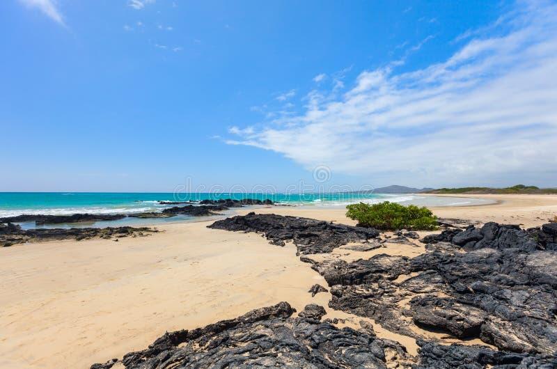 Spiaggia sull'isola di Galapagos Isabela, Ecuador fotografie stock libere da diritti