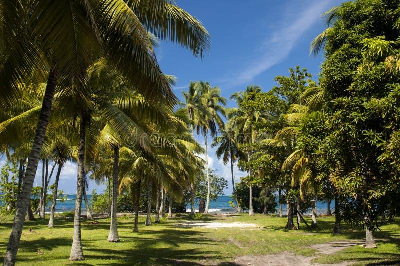 Spiaggia sull'isola tropicale Chiare palme dell'acqua blu, della sabbia ed in Tahiti fotografia stock