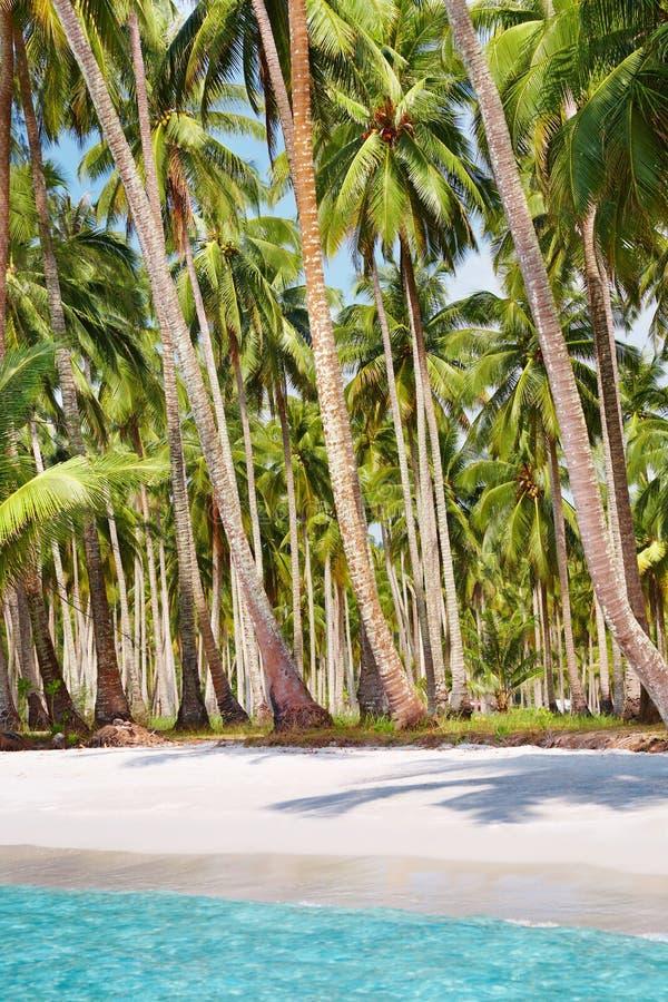 Spiaggia tropicale con il boschetto della palma immagini stock