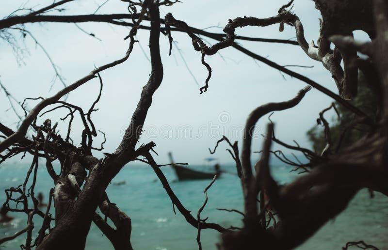Spiaggia tropicale con la barca fotografia stock libera da diritti
