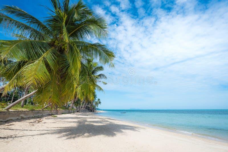 Spiaggia tropicale con le palme della noce di cocco KOH Samui, Tailandia fotografia stock libera da diritti