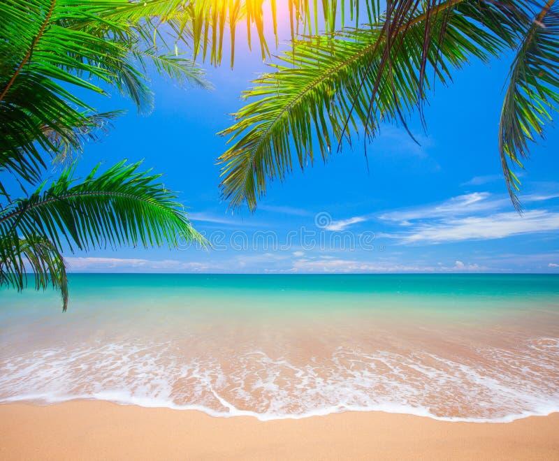Spiaggia tropicale con palma di cocco fotografia stock