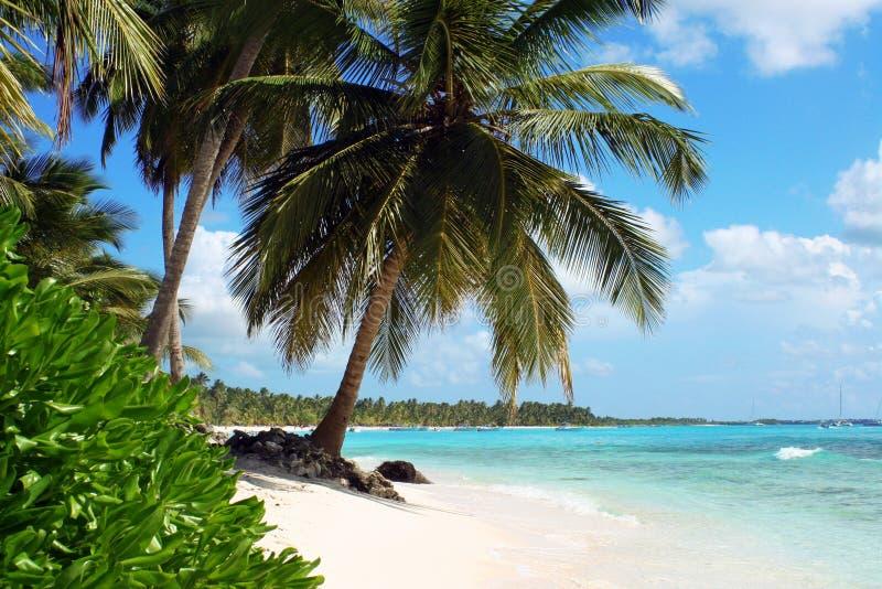Spiaggia tropicale dell'isola immagine stock libera da diritti