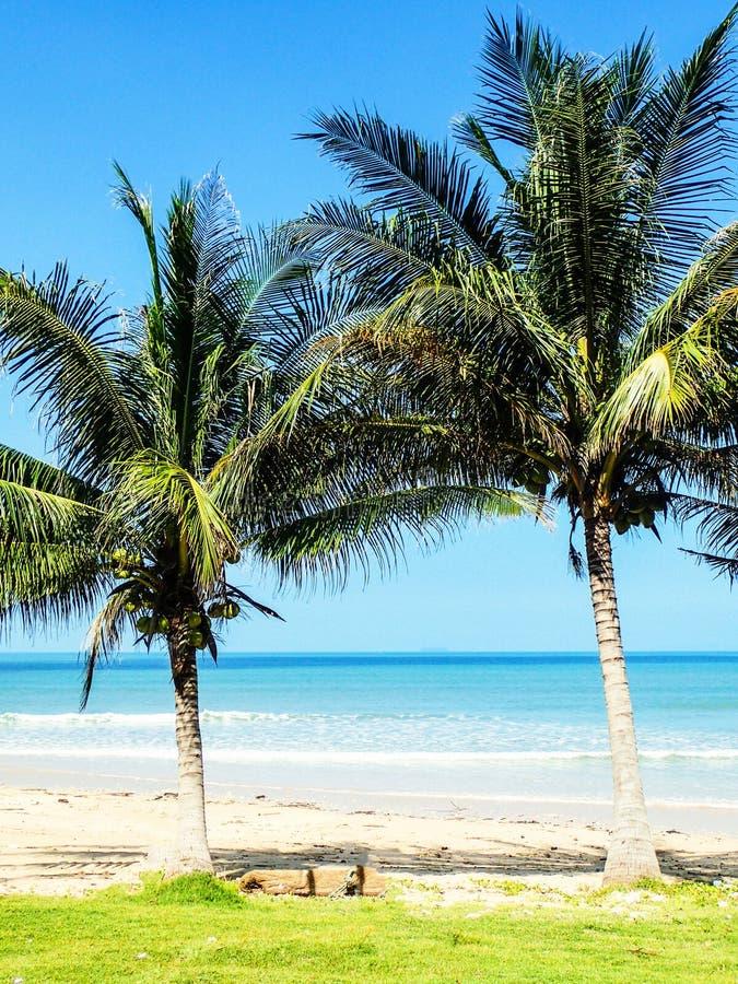 Spiaggia tropicale delle palme fotografia stock libera da diritti