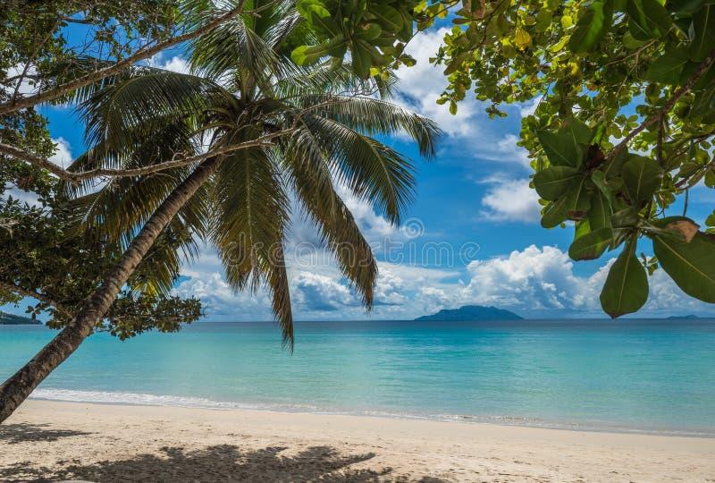 Spiaggia tropicale di Anse Beau Vallon, isola di Mahe, Seychelles fotografia stock libera da diritti