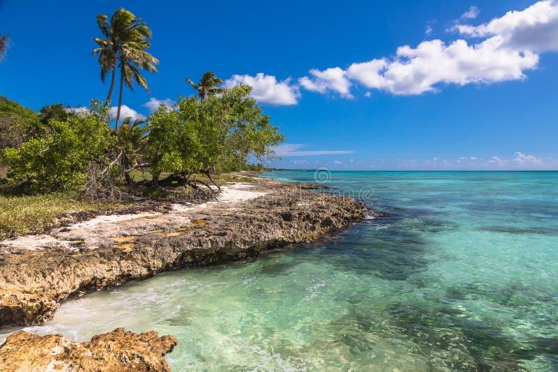 Spiaggia tropicale di corallo selvaggia, isola di Saona, mar dei Caraibi fotografia stock