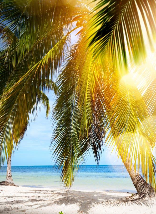 Spiaggia tropicale di estate immagine stock libera da diritti