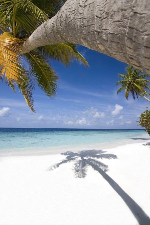 Spiaggia tropicale, Maldives fotografie stock libere da diritti