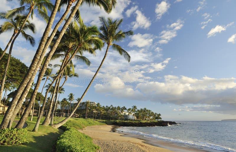 Spiaggia tropicale in Maui fotografie stock
