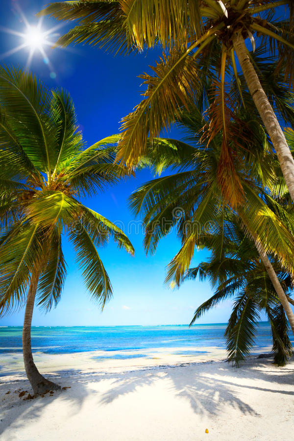 Spiaggia tropicale non trattata di estate di arte fotografia stock libera da diritti