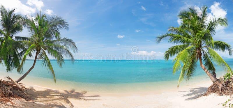 Spiaggia tropicale panoramica con la palma di noce di cocco immagine stock libera da diritti