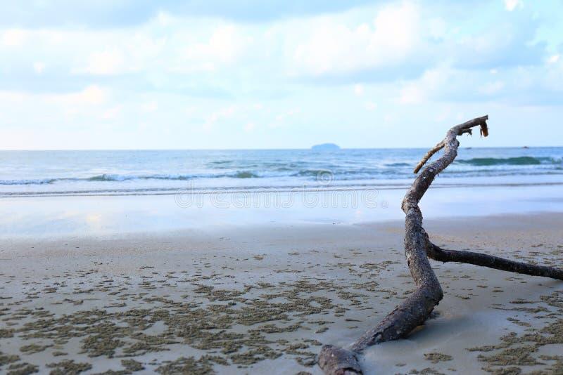 Spiaggia tropicale panoramica con rami marroni fotografia stock