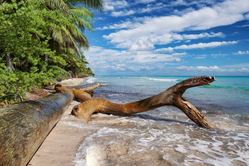 Spiaggia tropicale selvaggia in mare caraibico, isola di Saona, Repubblica dominicana fotografie stock
