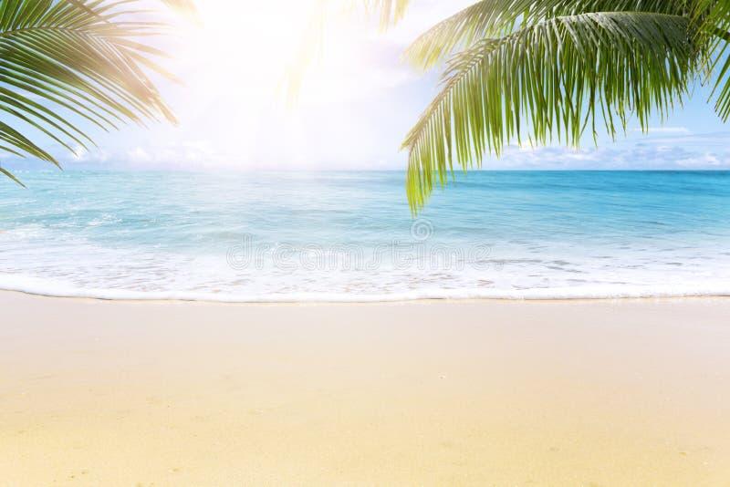 Spiaggia tropicale soleggiata con le palme fotografie stock libere da diritti