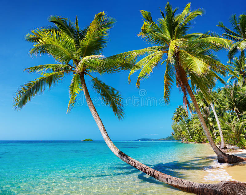 Spiaggia tropicale, Tailandia immagine stock
