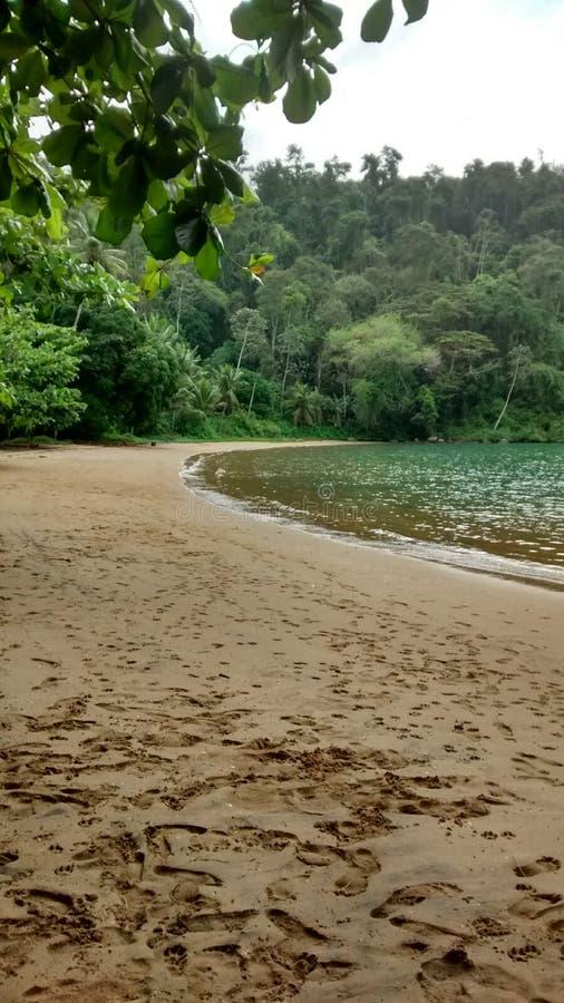 Spiaggia verde immagine stock