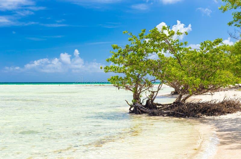 Spiaggia vergine in Cuba immagine stock libera da diritti