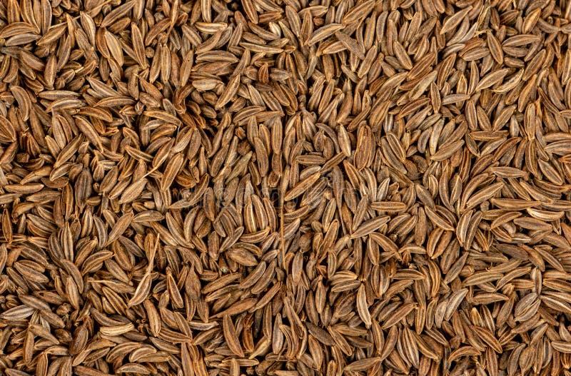 Spice dry cumin royalty free stock photo