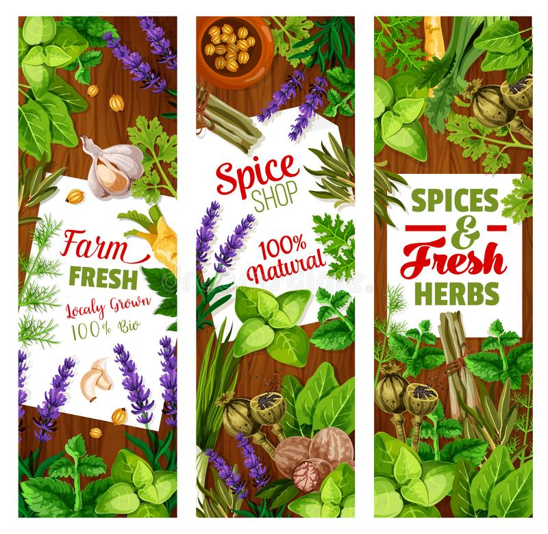 Seasoning and condiments, herbs and spices. Spice and herbs, seasoning and greenery, cooking condiments. Vector cardamom and ginger, lavender and parsley, nutmeg vector illustration