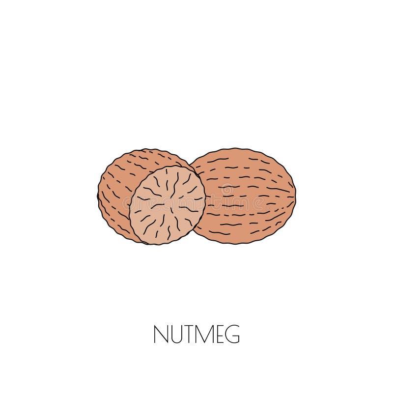 Spice nutmeg icon. Spice nutmeg colored icon. Vector image vector illustration
