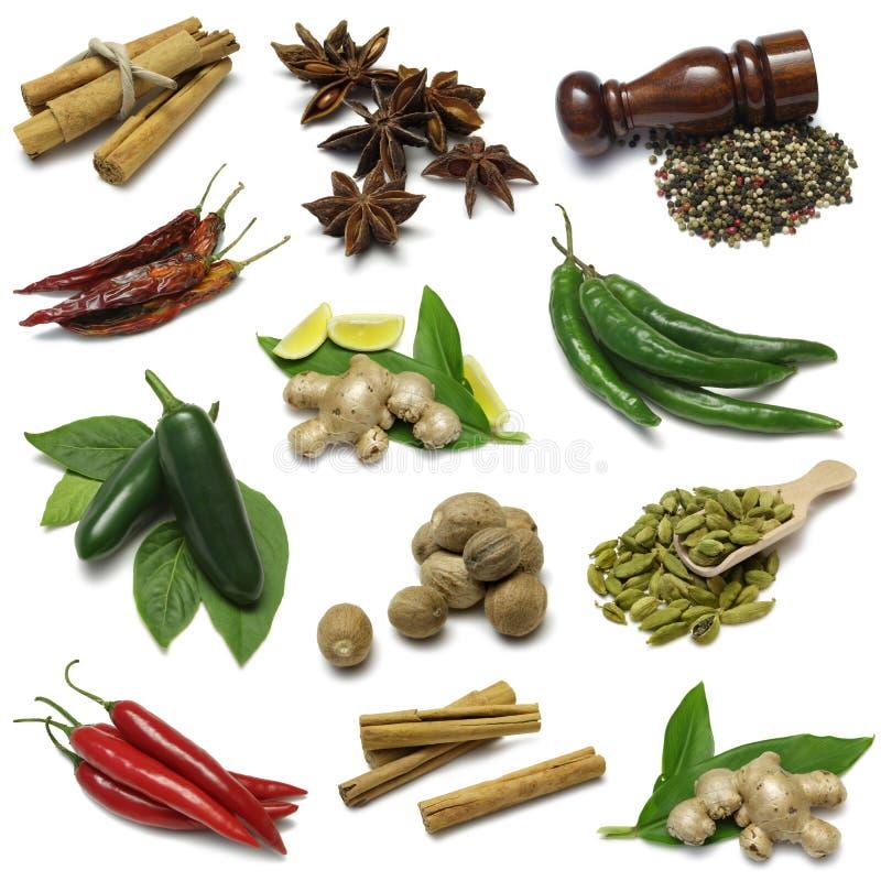 Spice Sampler stock image