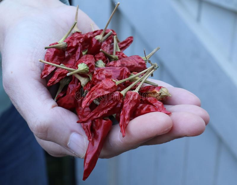 Spice it up with some hot chilli peppers why don`t you! stock photos