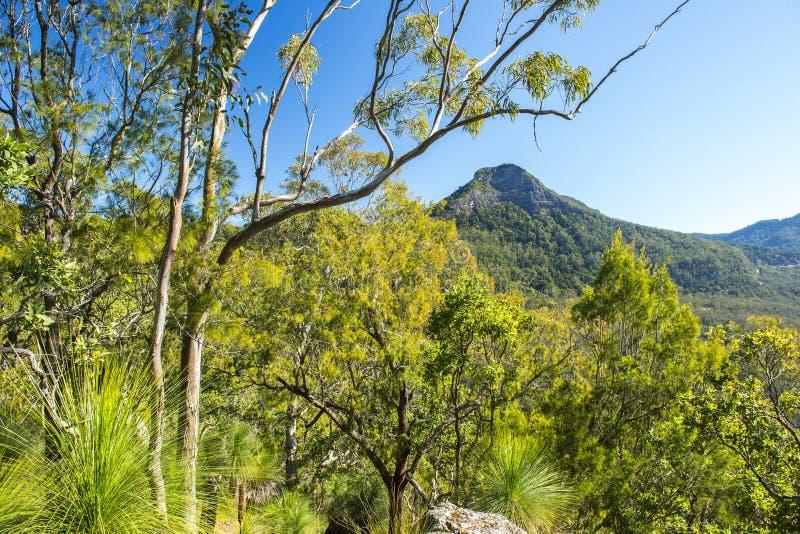 Spicers Gap utkik i den sceniska kanten, Queensland royaltyfri bild