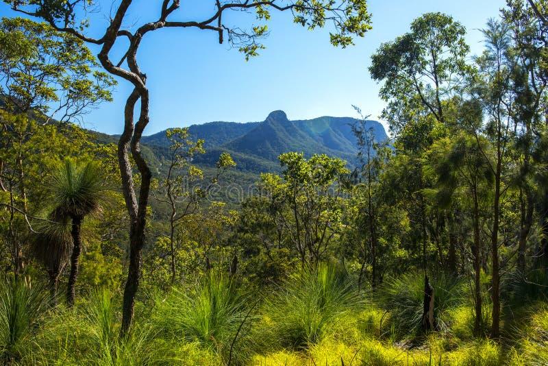 Spicers Gap utkik i den sceniska kanten, Queensland fotografering för bildbyråer
