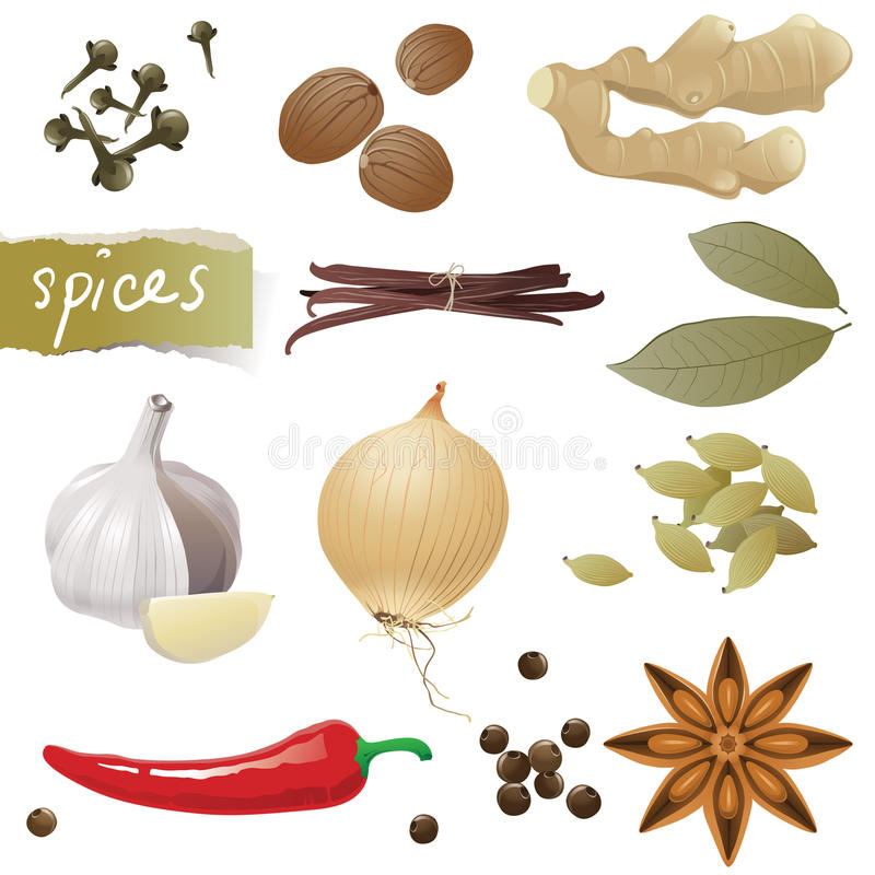 Spices. Great set of different spices stock illustration