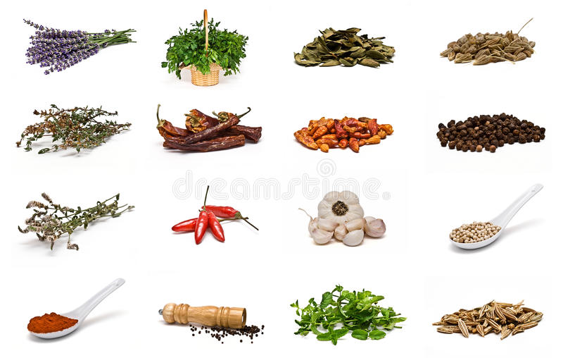 Spices collection. royalty free stock photo