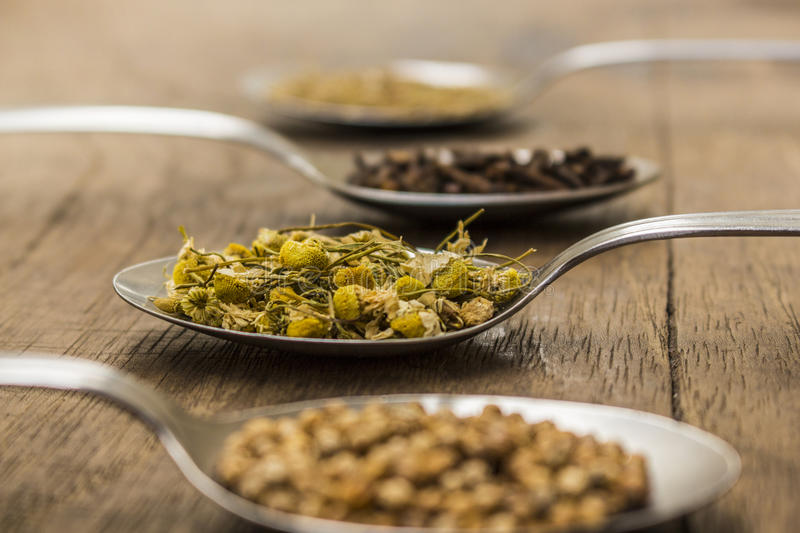 Spices and herbal tea ingredients on spoons. Spoons full of spices and herbal tea ingredients (coriander seeds, cloves, dry chamomile flowers and fennel stock photo