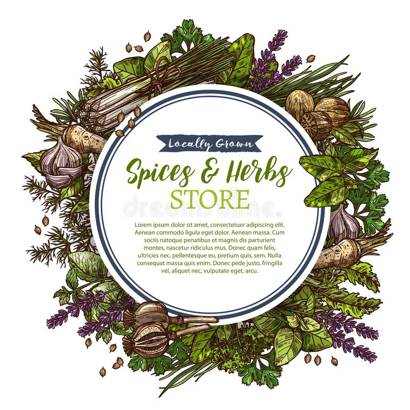Spices and herbs farm store vector sketch poster royalty free illustration