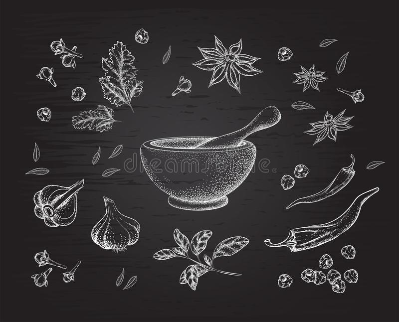 Spices, herbs and mortar. Background black Board vector illustration