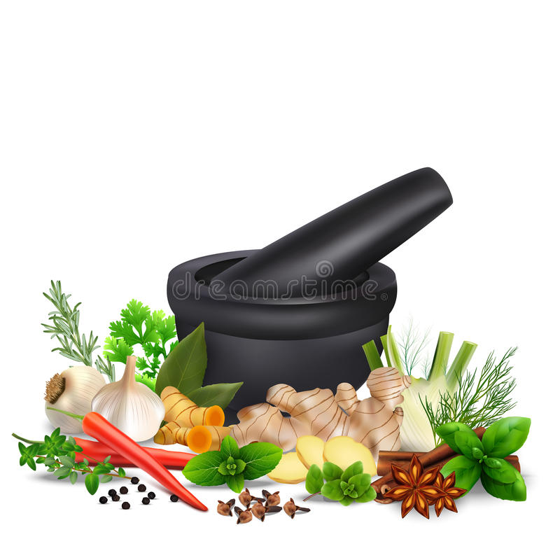 Spices and herbs with mortar and pestle isolated white background vector illustration