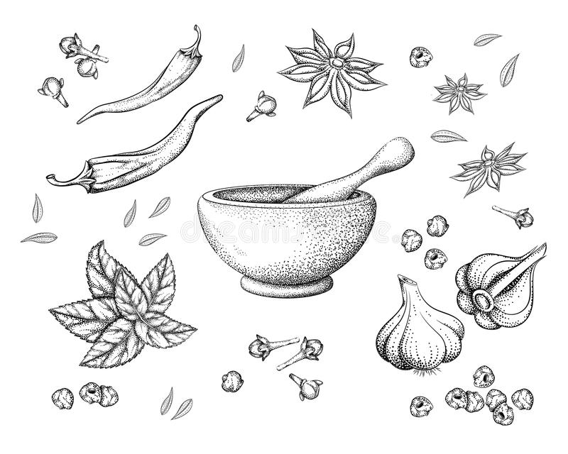 Spices and herbs and mortar with pestle royalty free illustration