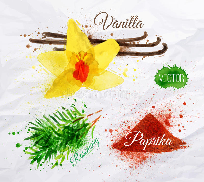 Spices herbs watercolor vanilla, rosemary, paprika royalty free illustration