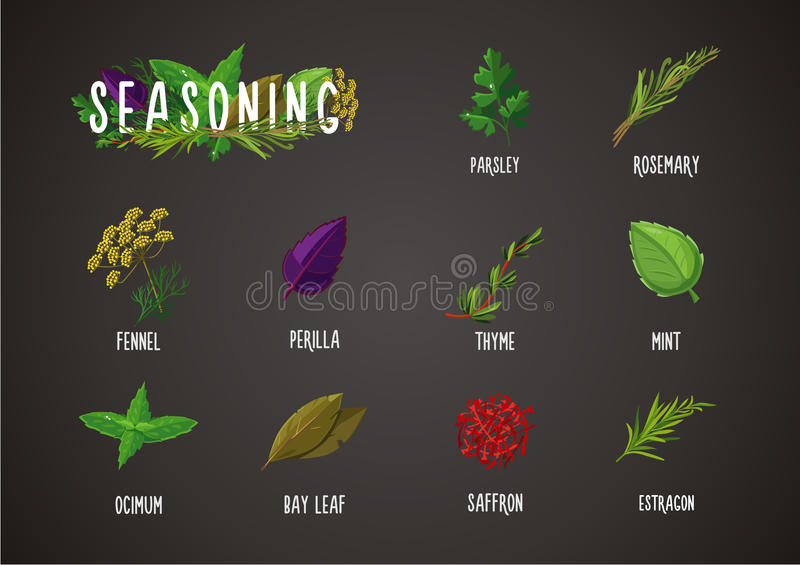 Spices and seasoning. Cooking ingredients. Culinary herbs and plants collection. vector illustration
