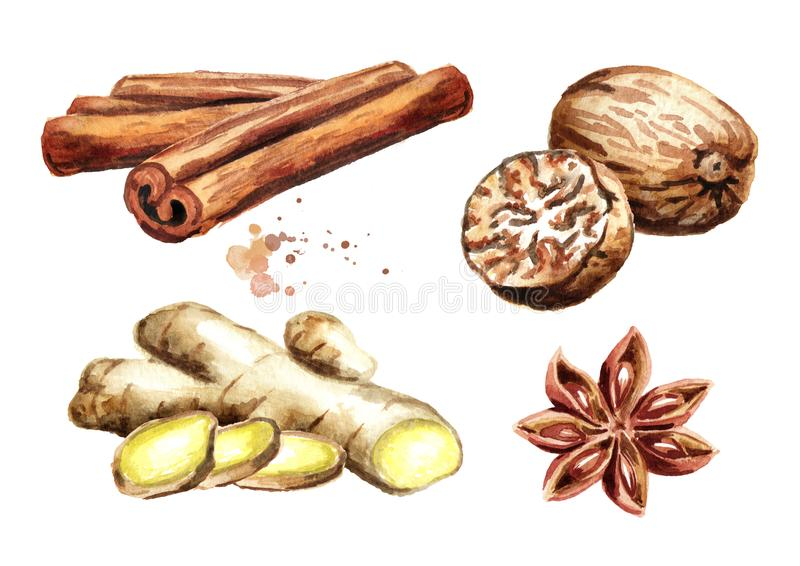 Spices set with ginger, cinnamon sticks, star anise and nutmeg. Watercolor hand drawn illustration isolated on white background. Spices set with ginger vector illustration