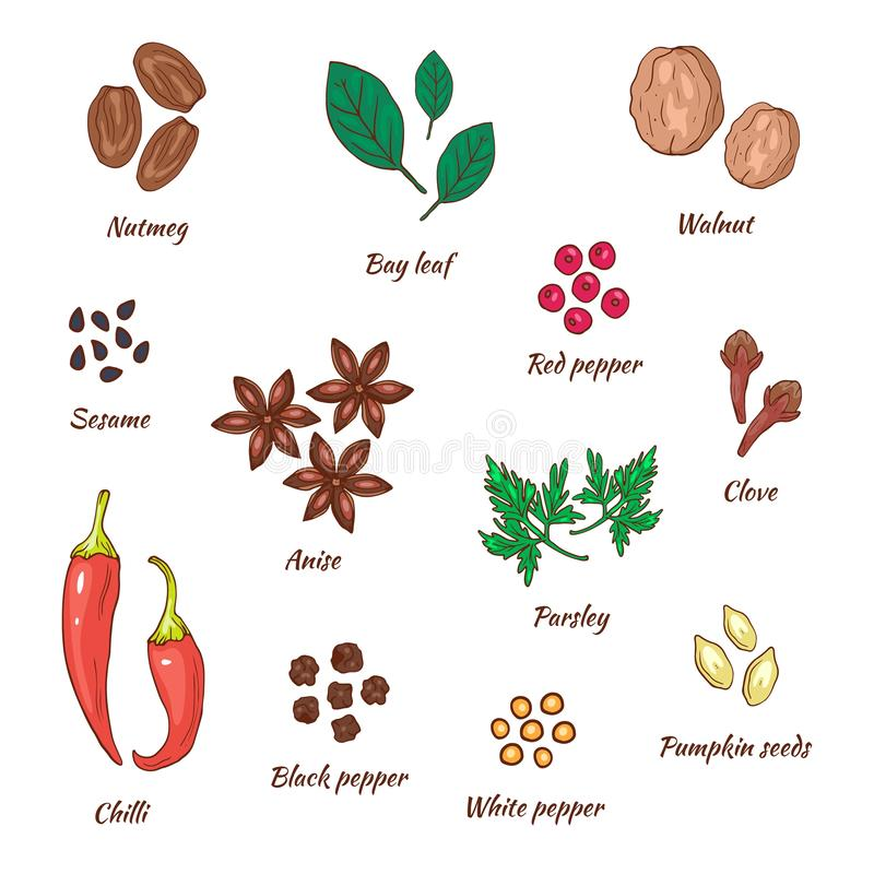 Spices vector illustration hand drawing set. Herbal and food collection. Walnut and nutmeg, bay leaf and pepper, sesame. And anise, parsley and clove, chilli royalty free illustration