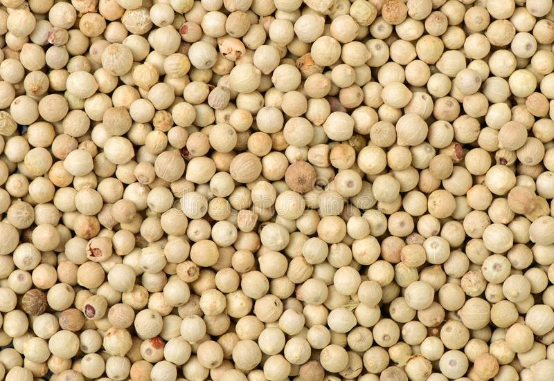 Spices of white pepper in detail. Background royalty free stock images
