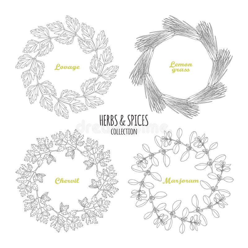 Spicy herb circle frames collection. Hand drawn lovage, lemongrass, chervil, marjoram. Kitchen background. Vector illustration vector illustration