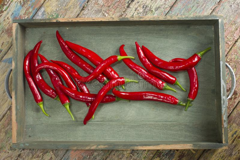 Spicy Red Chili Pepper stock photo