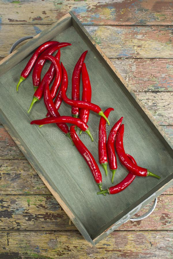 Spicy Red Chili Pepper stock image