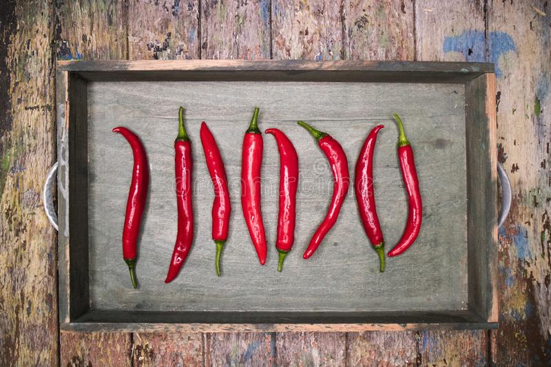 Spicy Red Chili Pepper royalty free stock images