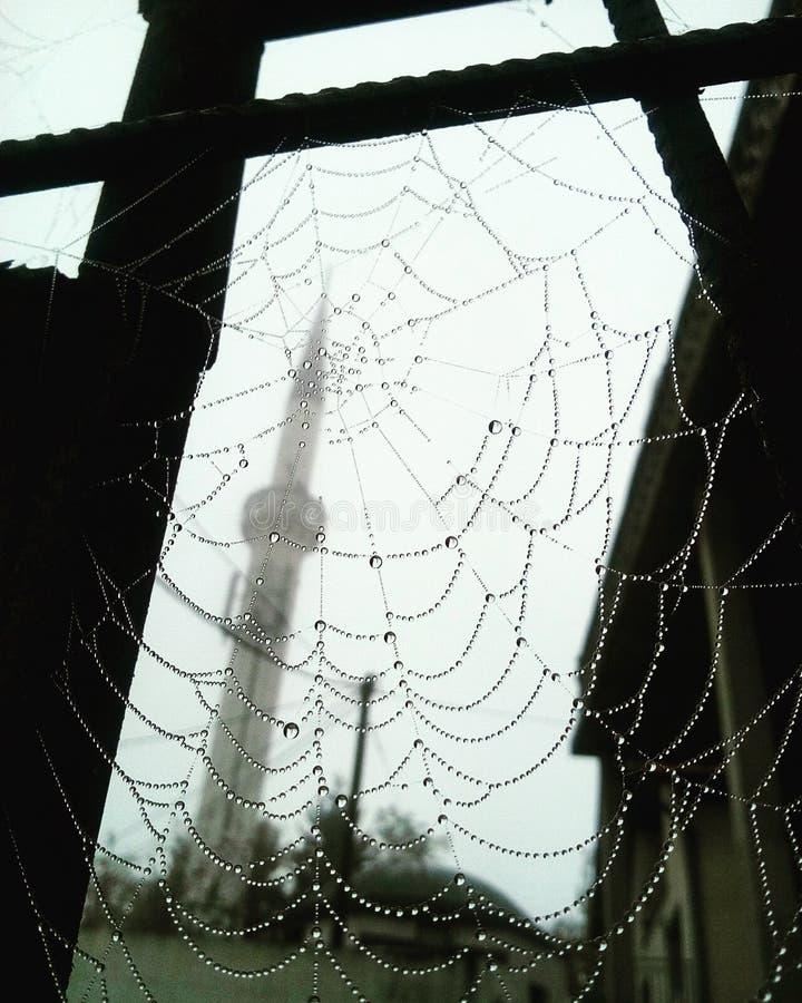 Spider's网 库存照片