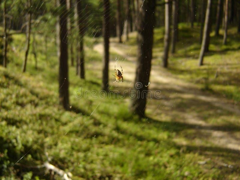 Spider& x27;s净在树之间 免版税图库摄影