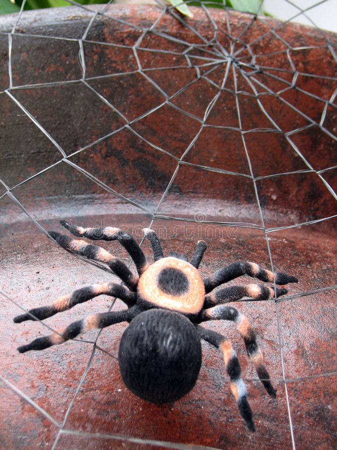 Spider. Shot of a spider (tarantula), on its spiderweb. (Decoration for Halloween royalty free stock images