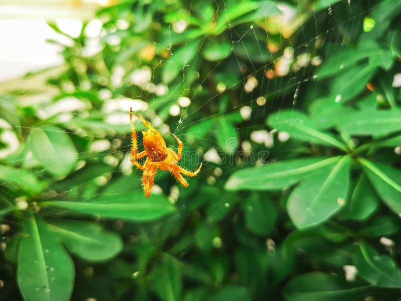 191-Spider fotografía de archivo