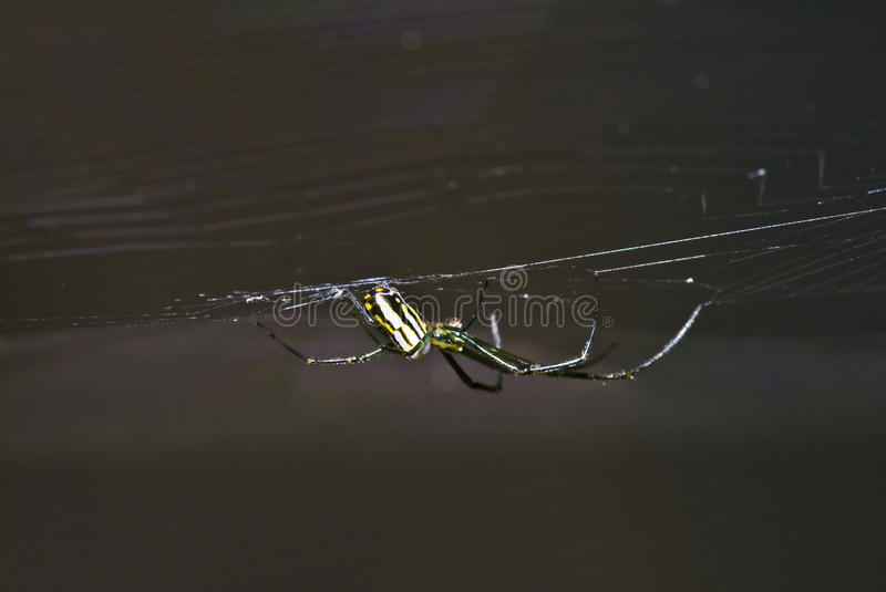 Download Spider Royalty Free Stock Image - Image: 13485866