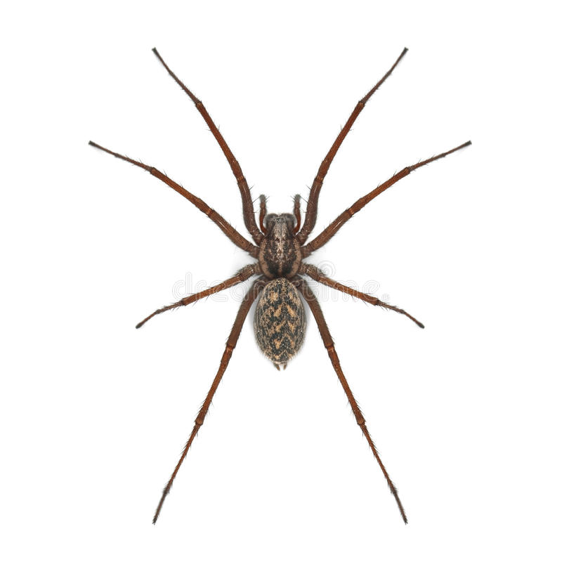 Download Spider stock image. Image of poisonous, ugliness, danger - 14385671